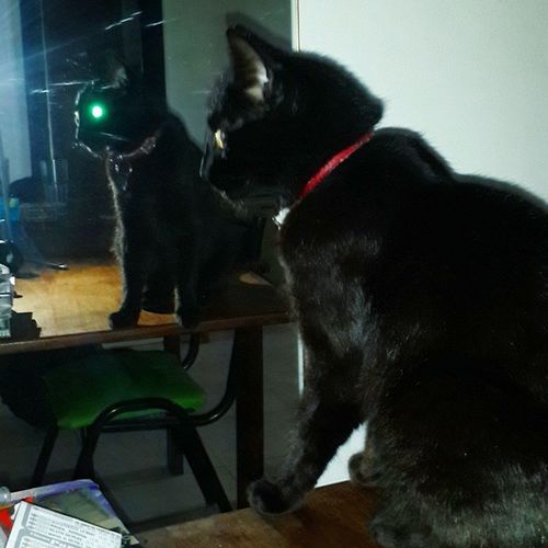 El lado oscuro de la vida.. Instapic BLackCat GatoNegro Trece thirteen thongue 13 cat cats gato gatos mirror espejo reflected reflection reflejo darkside ladooscuro eyes greeneyes yelloweyes red collar kitten kitty photooftheday pictureoftheday