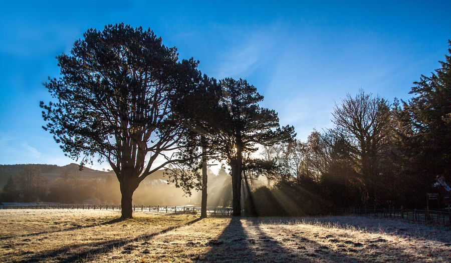 Frosty Morning - Hutton Gate Beauty In Nature Blue Sky Day Landscape Nature No People Outdoors Silhouette Sky Sun Beams Sun Rays Tree Place Of Heart