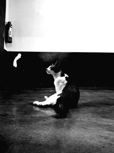 "Showcase June ""injured cat model...""Cat Model School Stolen Bnw Fur Staystill Sprained Injured Cute"