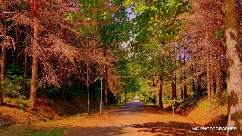 MCPHPTOGRAPHY Autumn Tree Forest Road Nature WoodLand The Way Forward Single Lane Road Outdoors Change Beauty In Nature Scenics Leaf Landscape No People Tree Area Deciduous Tree Day