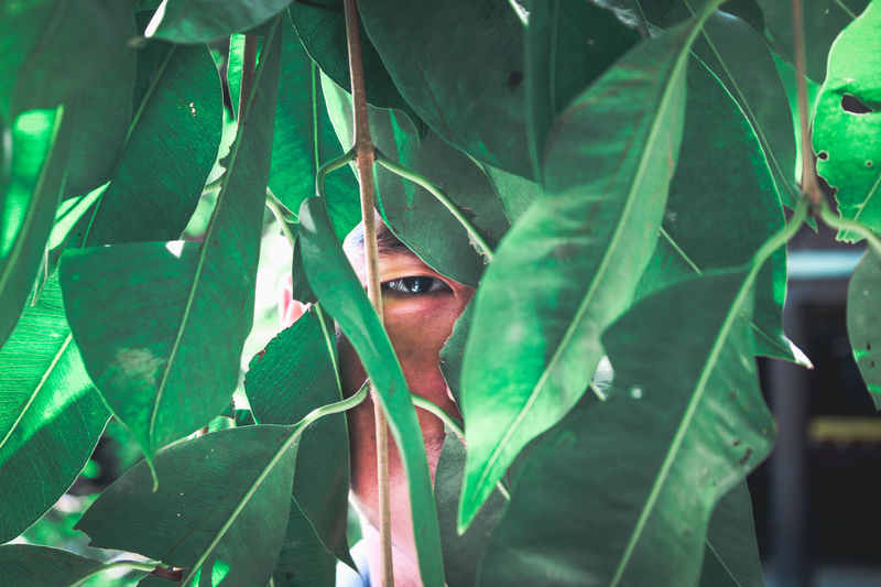 Portrait of young man seen through leaves