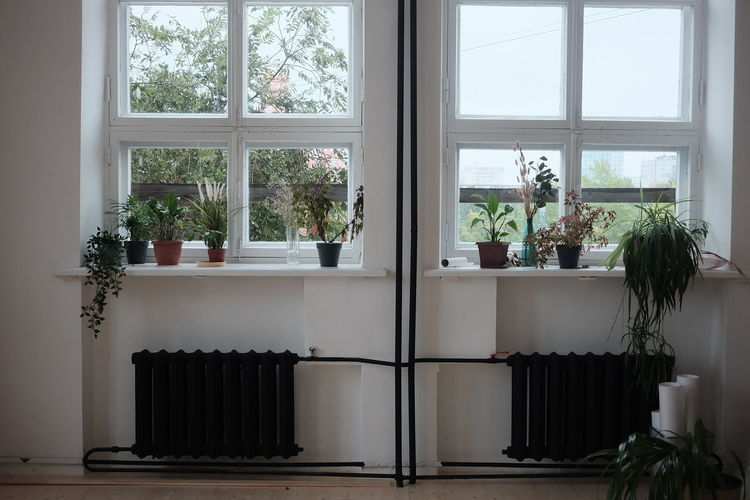 Potted plants on window sill at home