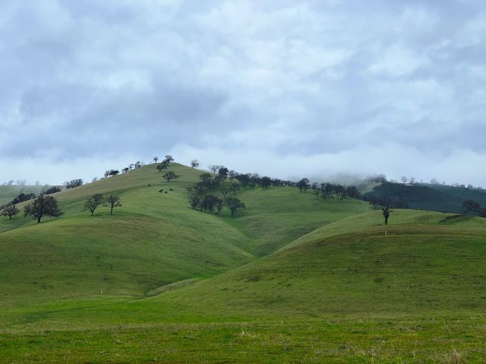 """Where The Oaks Grow Free"" California Oak trees grow freely scattered across rolling green hills on a Northern California cattle ranch. Clouds Scenics Low Clouds Oak Trees Oak Tree Green Hills Rolling Hills Cloud - Sky Sky Landscape Land Green Color Scenics - Nature"