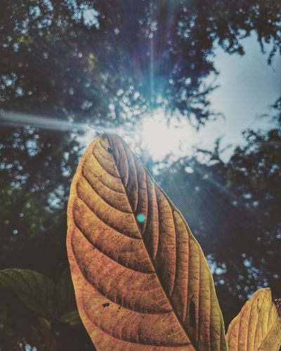 Bake me yellow Leaf Leaf Vein Sun Tree Leaves Yellow Bright Teampixel
