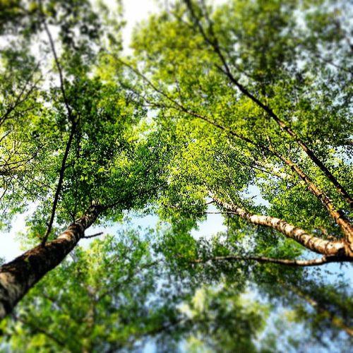 Moscow кузьминки Лес парк
