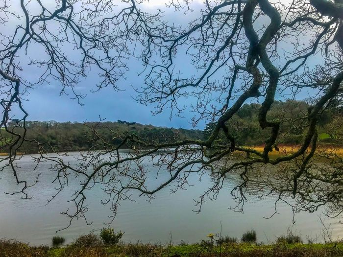 Just random pictures of my daily walk Cornwall Walks Screen Backgrounds Stock Photo Eye Em Gallery Landscape Tree Branch Nature Bare Tree Outdoors No People Beauty In Nature Lake Tranquility Grass Growth Water Green Color Scenics