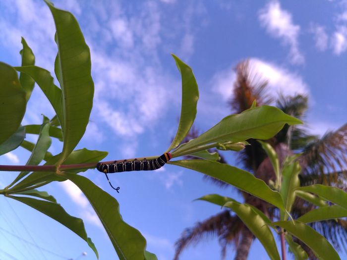 Low angle view of insect on tree against blue sky