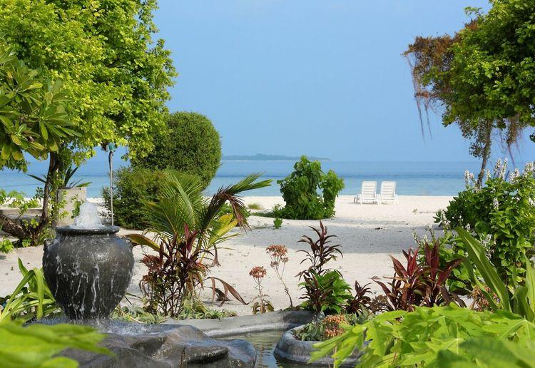 Beach Sea And Sky Seaside Sea View Green Trees Bushes