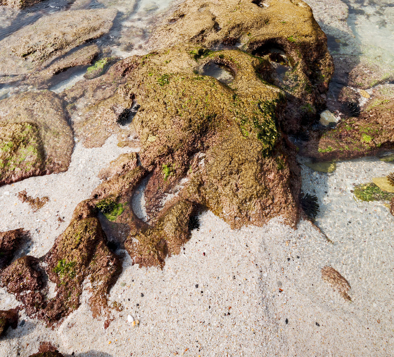 no people, nature, day, animal, close-up, animal themes, water, moss, land, plant, high angle view, textured, animal wildlife, animals in the wild, solid, outdoors, rock, growth, rough, beach