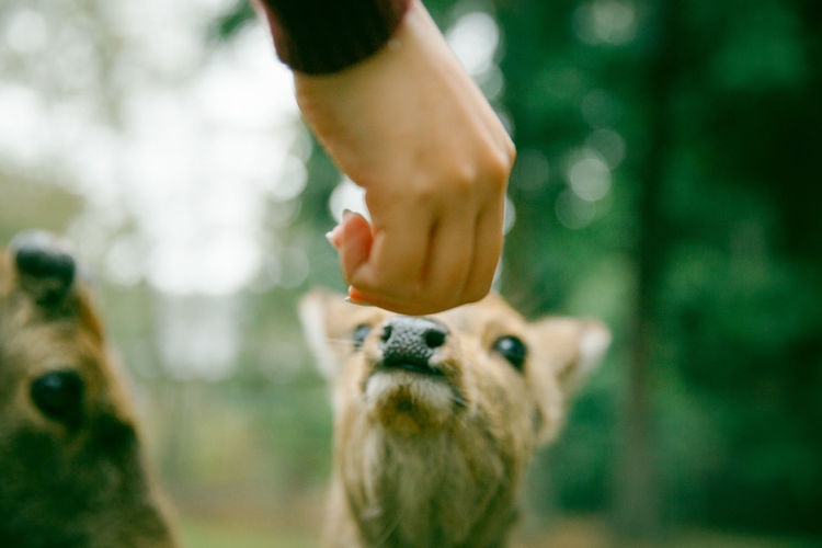 Close-up Cute Day Deer Focus On Foreground Japan Leisure Activity Lifestyles Mammal Nara Part Of Pet Owner Pets Portrait Selective Focus Spring Touching Unrecognizable Person Young Animal Showing Imperfection Out Of Focus Ultimate Japan Dramatic Angles Focus Object