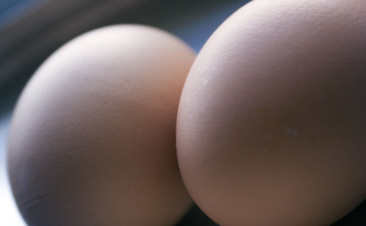 Kurze jajko Brekfast  Detail Eggs Food Foodphotography Hen Jajka Jwaniowska Minimalism Nature śniadanie