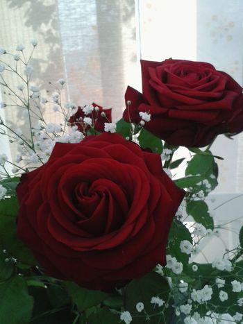 Flowerlovers EyeEm Flower Red Roses Love ♥ 🌷 Flowers 🌹 Flower Collection La Vie En Rose Enjoying Life Flowerporn Red Rose