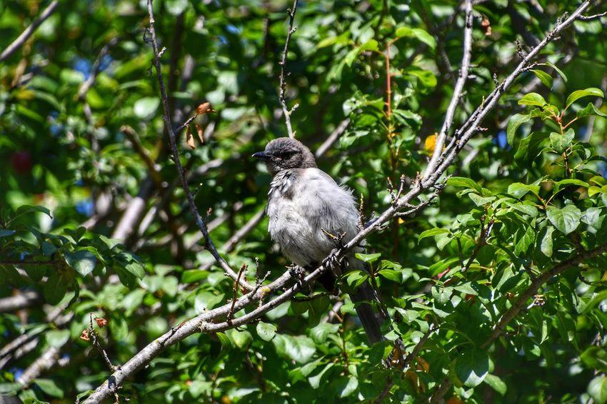 Bird Animal Wildlife Tree Nature Branch Animal Perching Animals In The Wild One Animal Outdoors Day Lake Chabot