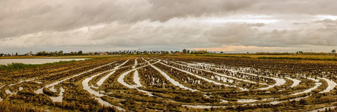Rice fields at Delta de l'Ebre 17.62° Delta De L'Ebre Ebre Rice Panorama Panoramic Panoramic Photography Delta Del Ebro Ebro Catalunya Catalunyaexperience Catalonia