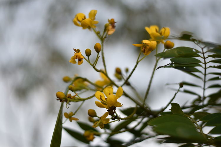 Photography Multiply Multiplying Flowers Flower Collection Flower Head Flower Tree Branch Leaf Yellow Plant Part Springtime Close-up Sky Plant Life