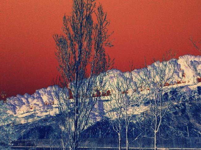Tree Slopedown Red Sky Digital Art Taking Photos Nature Night Vision