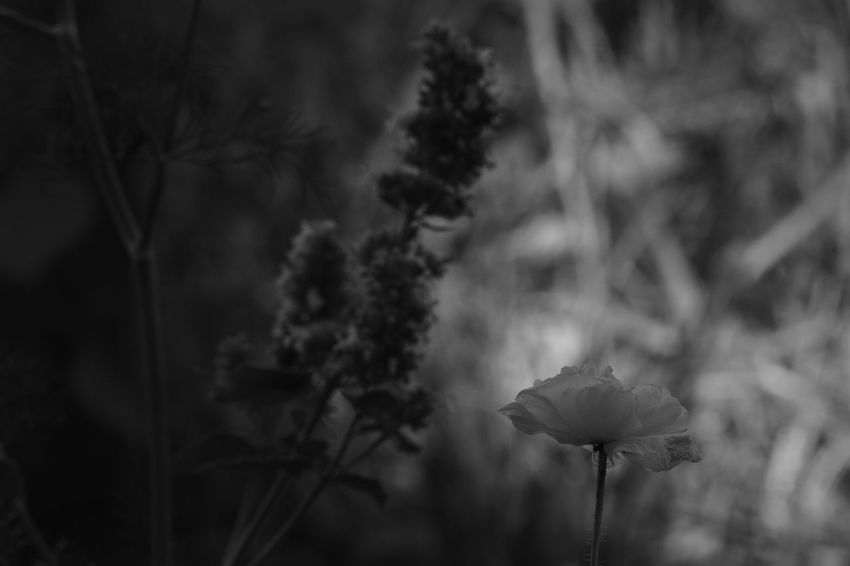 Beauty In Nature Close-up Day Eye4photography  EyeEm Best Shots EyeEm Nature Lover Flower Flower Head Fragility Freshness Growth Monochrome Nature No People Outdoors Plant Soft Light Softness Tree