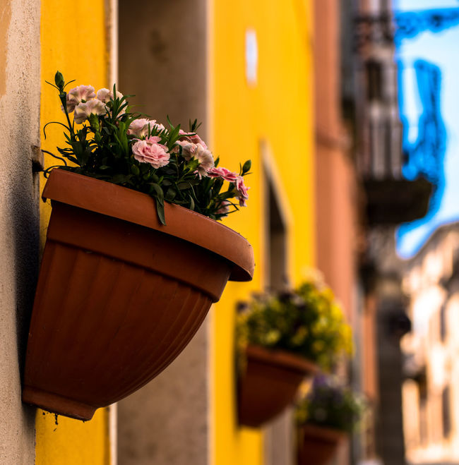 Florence, Italy Architecture Beauty In Nature Building Building Exterior Built Structure Close-up Day Flower Flower Arrangement Flower Head Flower Pot Flowering Plant Focus On Foreground Fragility Freshness Growth Nature No People Outdoors Plant Potted Plant Vulnerability