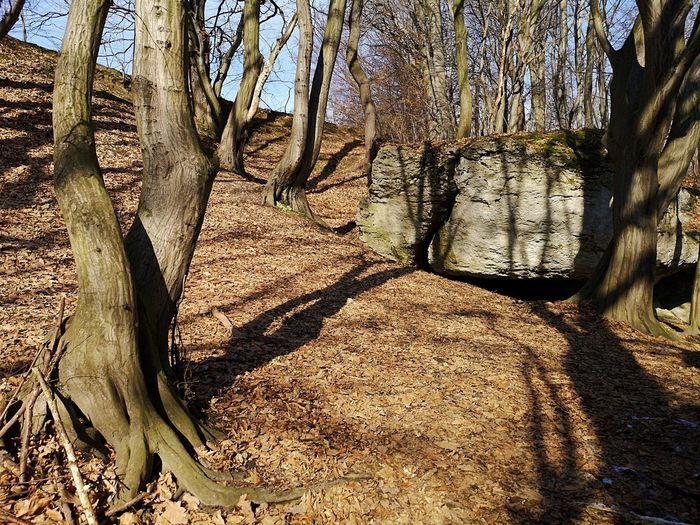 Shadow of tree on landscape