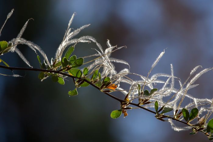 Perspectives On Nature Nature Growth Plant Outdoors Leaf Beauty In Nature Day No People Fragility Branch Focus On Foreground Plant Feathers, Soft, Contrast, Light, Delicate, Fragile, Light And Dark Feather