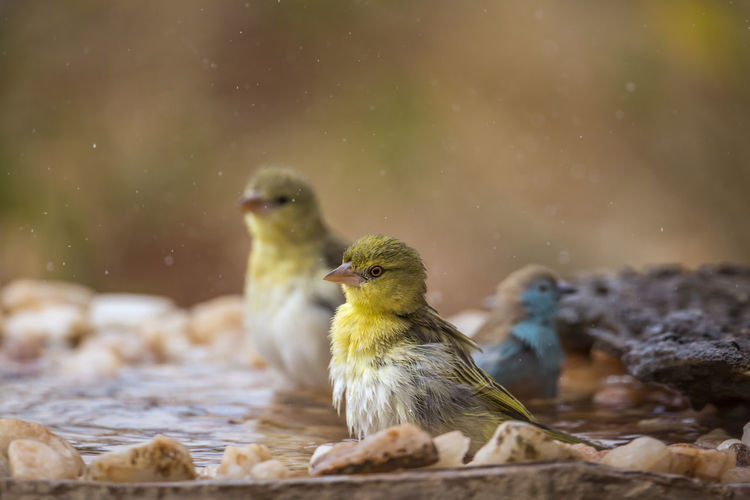 Close-up of birds perching on a water