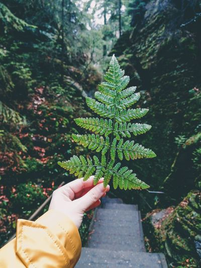 Close-up of hand holding leaves against trees