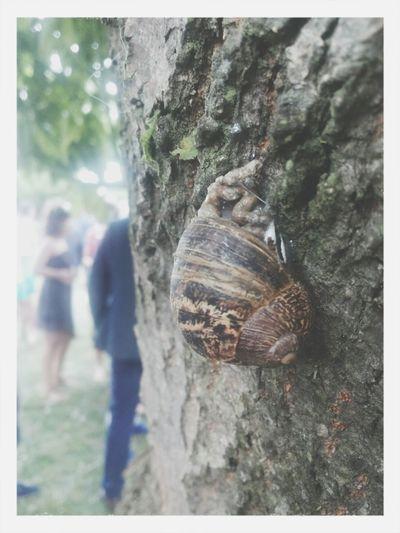 Nature ❤