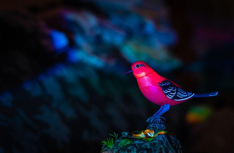 Close-up of a bird perched