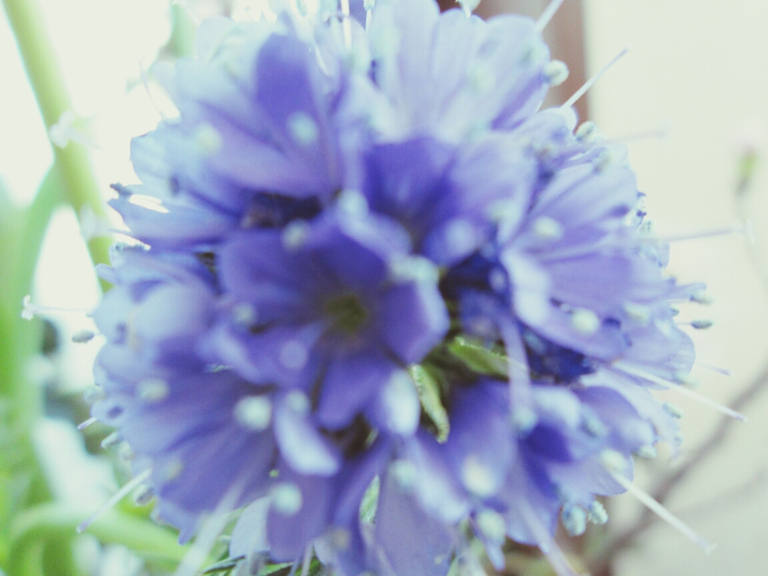 flower, freshness, petal, flower head, fragility, close-up, growth, purple, beauty in nature, nature, blooming, pollen, plant, focus on foreground, single flower, in bloom, selective focus, stamen, blossom, no people