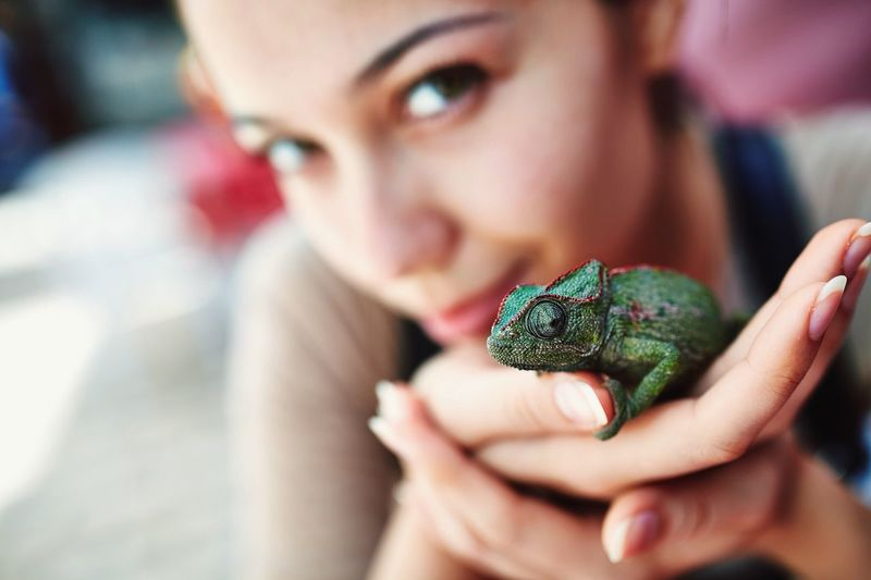 Close-Up Of Young Woman Holding Chameleon