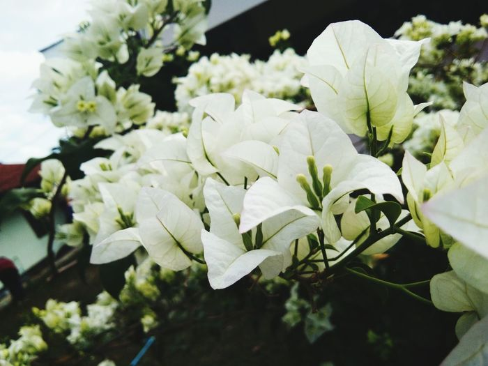 Flower Growth Freshness Fragility Nature Plant Petal Close-up Flower Head Springtime Outdoors Beauty In Nature No People Day
