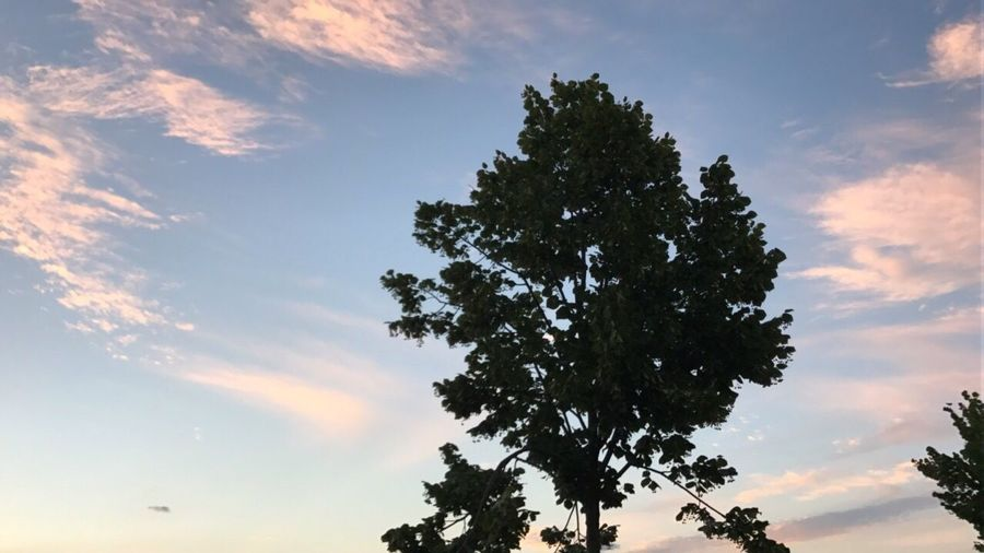 Prospective Tree Sky Low Angle View Silhouette Beauty In Nature Nature No People Cloud - Sky Tranquility Scenics Growth Outdoors Sunset Day Branch