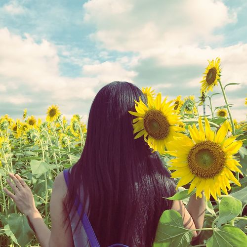 Rear view of woman standing in sunflower field against sky