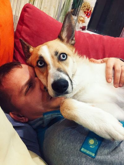 Pets Dog One Animal Domestic Animals Animal Themes Mammal One Person Indoors  Sofa Home Interior Lying Down High Angle View Real People Looking At Camera Lifestyles Bonding Portrait Close-up Dog Photography Human Hand Blue Eyes Lilu The Shepsky Lilushastik Lilu Shepsky Pet Portraits