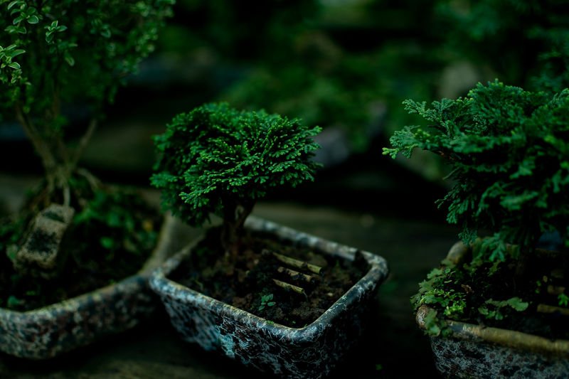 EyeEm EyeEm Selects EyeEm Gallery EyeEmBestPics Beauty In Nature Bonsai Tree Botany Close-up Day Focus On Foreground Freshness Front Or Back Yard Gardening Green Color Growth Leaf Nature No People Outdoors Plant Plant Part Potted Plant Selective Focus Tranquility Tree
