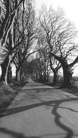 Branch Blackandwhite Shadow Perspectives on Nature Dark Hedges On The Road Tree Tree Trunk Road Bare Tree Sky Empty Road Tranquil Scene Country Road