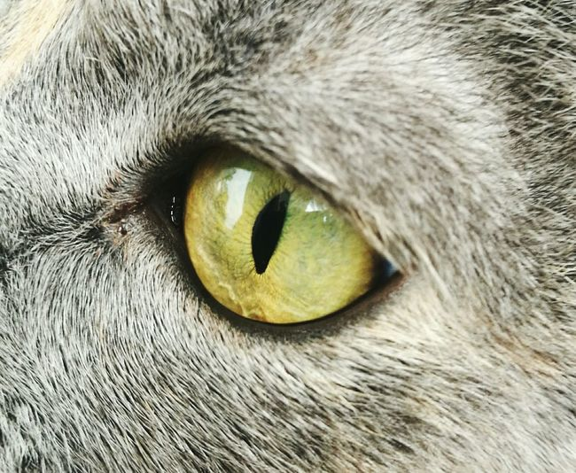 One Animal Domestic Animals Pets Domestic Cat Animal Eye Mammal Animal Themes Feline Close-up Animal Body Part Extreme Close-up Full Frame No People Iris - Eye Backgrounds Eyesight Tabby Cat Indoors  Day