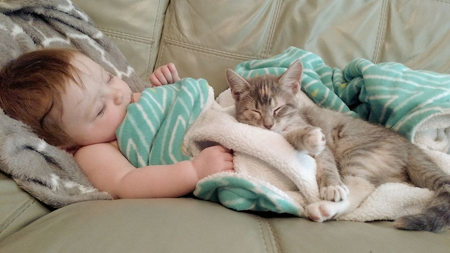 Cute baby girl sleeping with cat on sofa at home