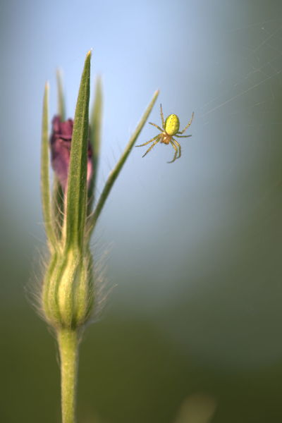 Beauty In Nature Bud Day Flower Green Nature Spider Insect Fragility Flower Head