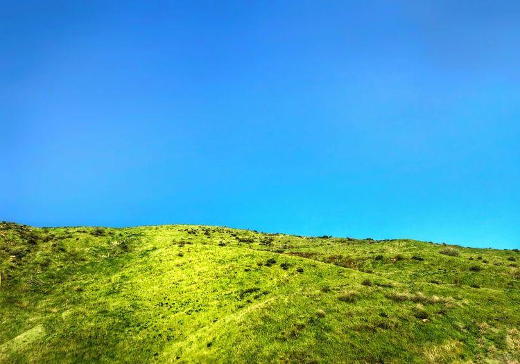 Green grassy