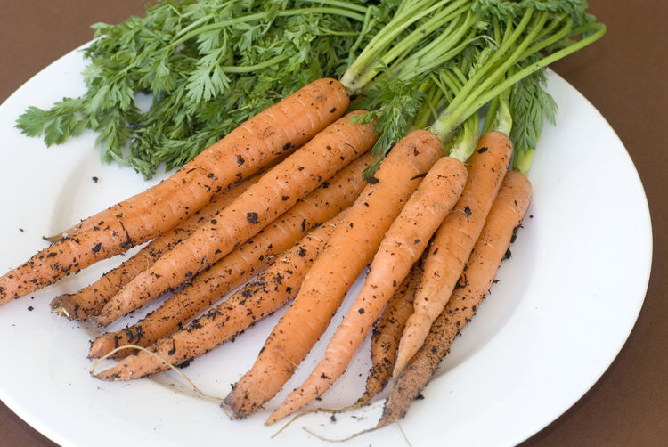 Bunches of orange carrots recently pulled from ground with pieces of soil on them over white plate Bio Carrots Dirt Food Fresh Green Ingredient Leaves Natural Nutritious Organic Plate Raw Ripe Roots Rustic Soil Table Vegetables Vitamin A