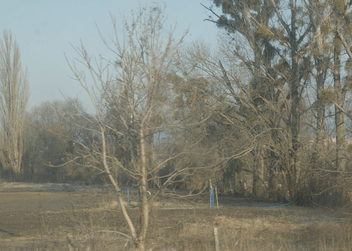 12157 Bleak,t Day Nature Outdoors Tree Tristesselover View From Train Window