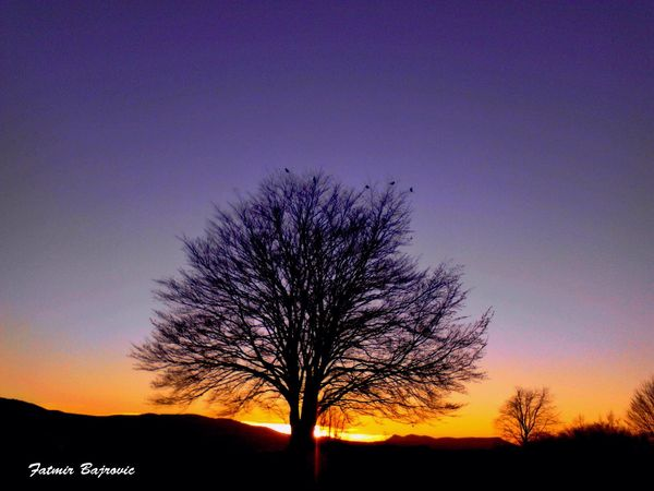Sunset behind a tree Bare Tree Beauty In Nature Branch Clear Sky Copy Space Idyllic Landscape Majestic Nature No People Non-urban Scene Orange Color Outdoors Scenics Silhouette Sky Sunset Tranquil Scene Tranquility Tree