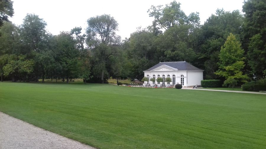 дом трава Tree