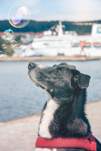 Tari at the sea. Bubbles Dogs Dogs Of EyeEm EyeEm Gallery Moment Animal Animal Themes Bubble Close-up Colour Of Life Dog Dog Portrait Dogslife Dogstagram Domestic Animals Focus On Foreground Mammal No People One Animal Outdoors Pets