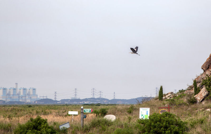 Animals In The Wild Bird Blue Clear Sky Communication Community Copy Space Day Distant Electricity  Flying Heron Human Settlement Low Angle View Mid-air Nature No People Outdoors Residential District Rural Scenes Technology Voyage Wildlife
