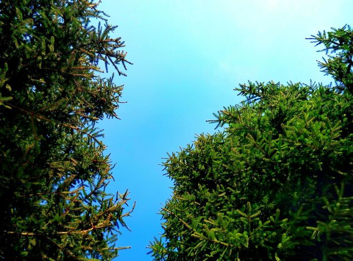 Tree Low Angle View Nature Summer No People Sky Branch Outdoors Beauty In Nature Close-up Day Landscape Cloud - Sky Tree Nature Maruševec Shadow Bamboo Grove Growth Grass People Night Autumn Sunlight Travel