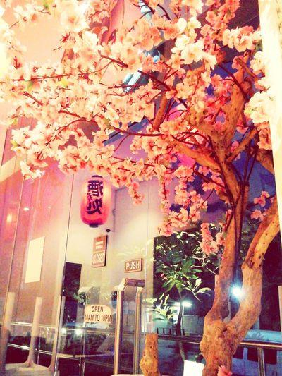 Sakura Sakura Sakura Blossom SakuraSakura2017 Japanesenature