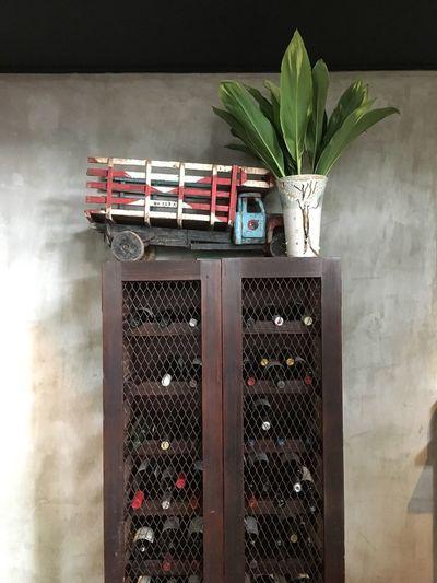 Shelf No People Indoors  Day Close-up Green Plant Wood Interior Design Wine Cellar