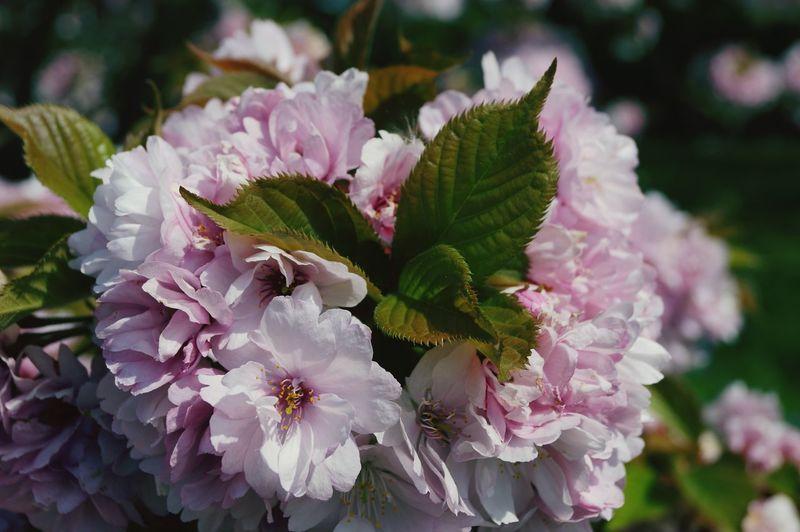 Royal Botanic Gardens Kew Gardens Flowers 🌸🌸🌸 London